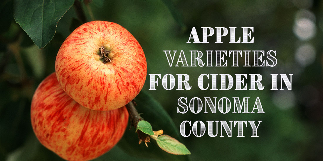 Sonoma County Apple Varieties Best for Making Cider