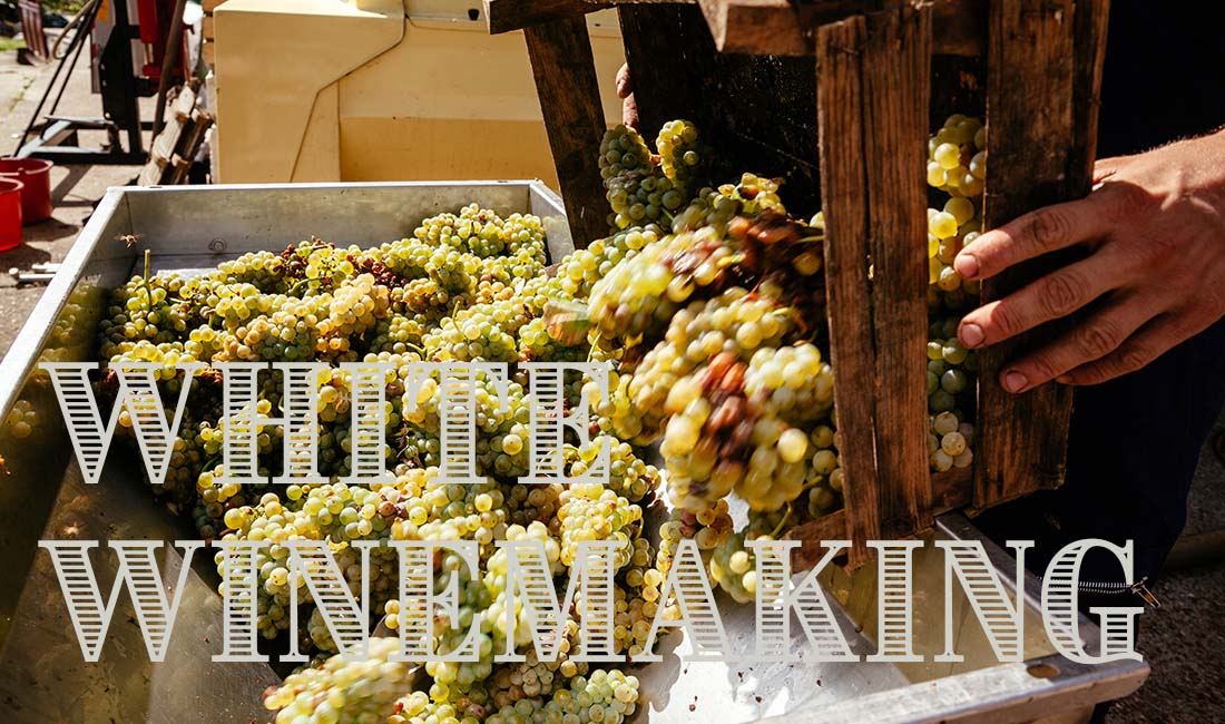 Home White Winemaking Instructions
