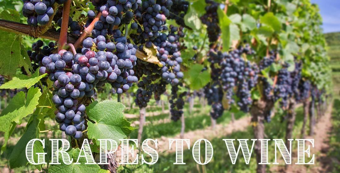 vineyard2words