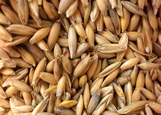 Thomas Fawcetts Oat Malt - 2L - 1 lb.