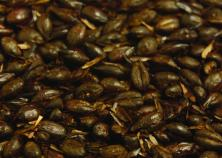 Briess Black Roasted Barley - Unmalted - 500L - 1 lb.