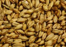 Briess (Distiller's) 6 Row Malt - 1.8L - 50 lbs.
